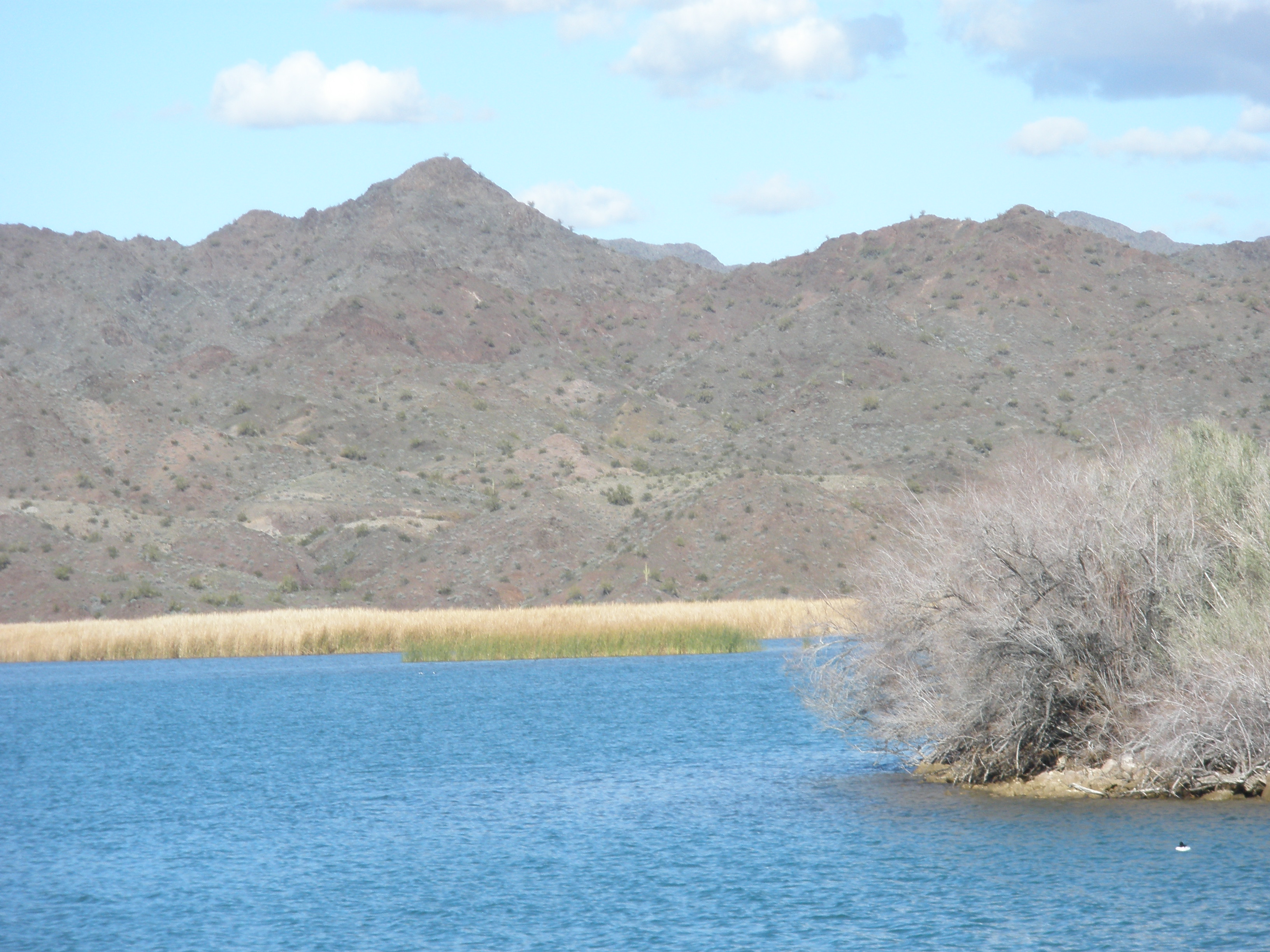 flow rate from alamo dam arizona